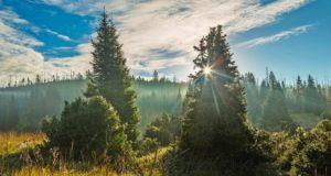 Krásy bavorského lesa